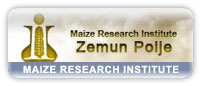 Maize Research Institute